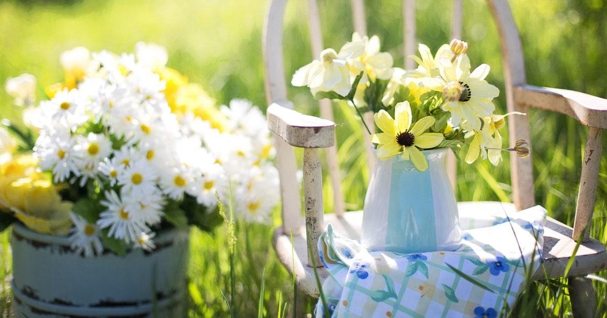 Flowers Summer Garden Daisies